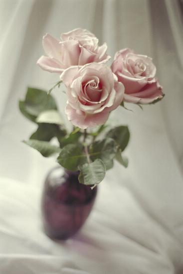 Pink Roses-Anna Miller-Photographic Print
