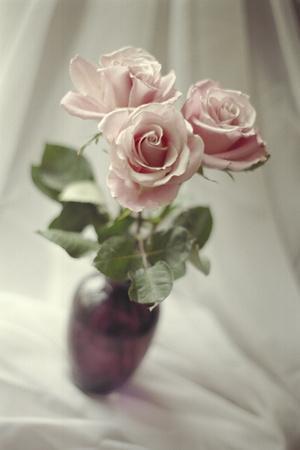 https://imgc.artprintimages.com/img/print/pink-roses_u-l-q10voeb0.jpg?p=0