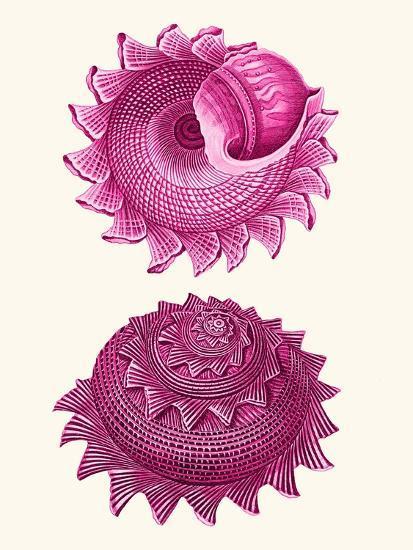 Pink Shells b-Fab Funky-Art Print