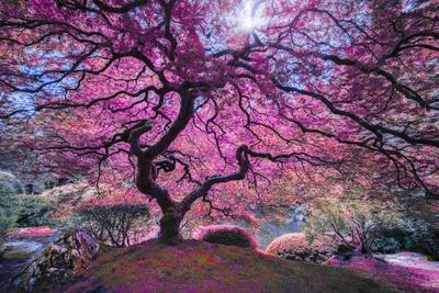https://imgc.artprintimages.com/img/print/pink-tree-2_u-l-q12uvdx0.jpg?p=0