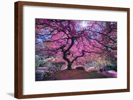 Pink Tree 2-Moises Levy-Framed Photographic Print