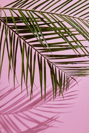 https://imgc.artprintimages.com/img/print/pink-tropical_u-l-q1bzjpz0.jpg?p=0