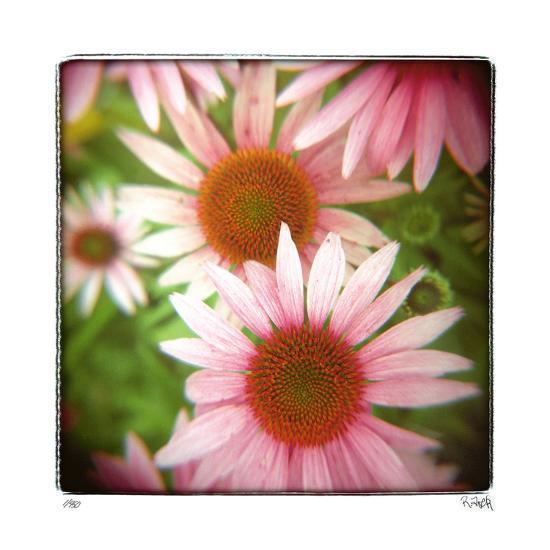 Pink-Rebecca Tolk-Giclee Print