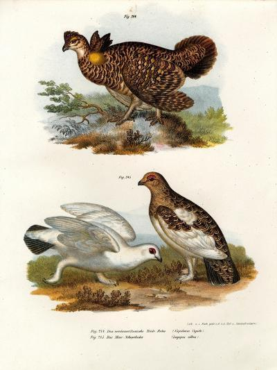 Pinnated Grouse, 1864--Giclee Print