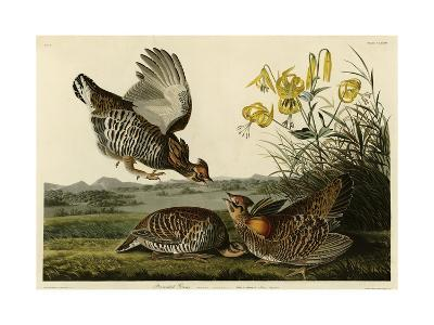 Pinnated Grouse--Giclee Print