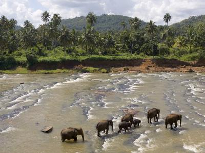 Pinnewala Elephant Orphanage Near Kegalle, Hill Country, Sri Lanka-Gavin Hellier-Photographic Print