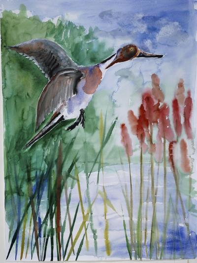 Pintail Duck-Sir Roy Calne-Giclee Print