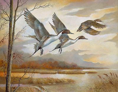 Pintails-Ruane Manning-Art Print