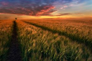 Somewhere At Sunset by Piotr Krol (Bax)
