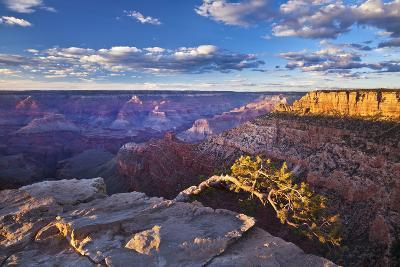 Pipe Creek Vista Point Overlook, South Rim, Grand Canyon Nat'l Park, UNESCO Site, Arizona, USA-Neale Clark-Photographic Print