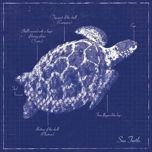 Blueprint Sea Turtle by Piper Ballantyne