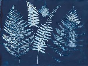 Nature By The Lake - Ferns I by Piper Rhue