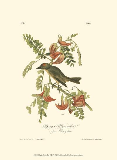 Pipiry Flycatcher-John James Audubon-Art Print