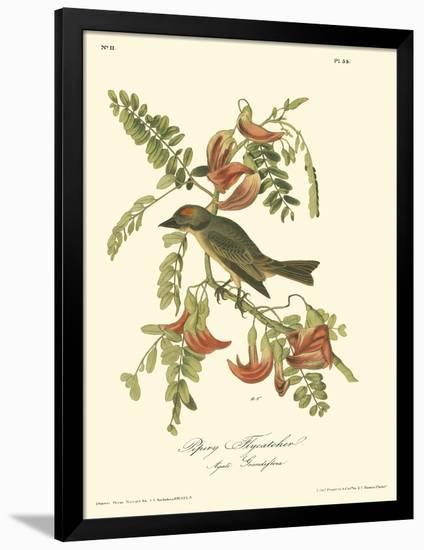 Pipiry Flycatcher-John James Audubon-Framed Premium Giclee Print