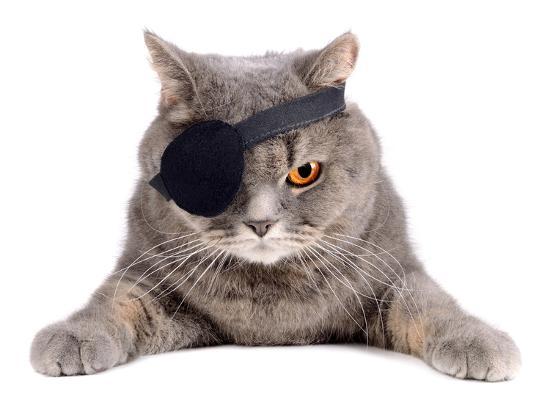 Pirate Cat- eAlisa-Photographic Print