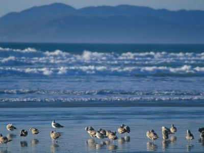 Pismo Beach, California, USA-Nik Wheeler-Photographic Print