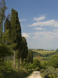 Countryside Near Montepulciano, Val D'Orcia, Siena Province, Tuscany, Italy, Europe by Pitamitz Sergio
