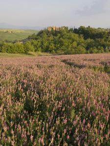 Countryside Near Pienza. Val D'Orcia, Siena Province, Tuscany, Italy, Europe by Pitamitz Sergio