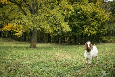 Pittsburg, PA. USA. Fall on the Farm-Julien McRoberts-Photographic Print