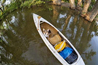 Corgi Dog in a Decked Expedition Canoe on a Lake in Colorado, a Distorted Wide Angle Fisheye Lens P