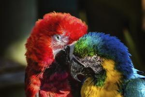 Birds by Pixie Pics