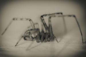 Spider 2 by Pixie Pics