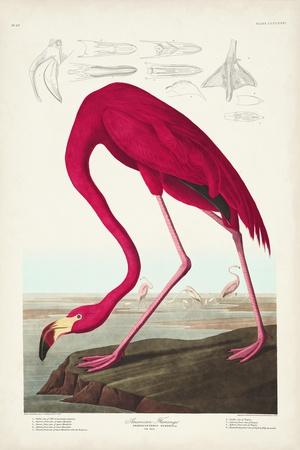 https://imgc.artprintimages.com/img/print/pl-431-american-flamingo_u-l-q1gwae00.jpg?p=0