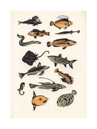 https://imgc.artprintimages.com/img/print/plain-fish-2015_u-l-q105syo0.jpg?p=0
