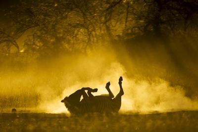 https://imgc.artprintimages.com/img/print/plains-zebra-at-sunset-moremi-game-reserve-botswana_u-l-pzqj8i0.jpg?p=0