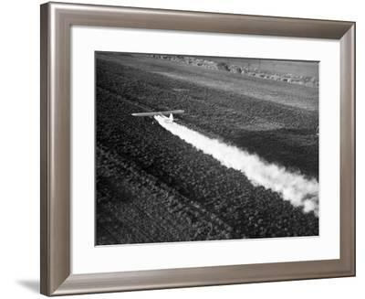 Plane Spraying Alfalfa Fields in Imperial Valley with Ddt-Loomis Dean-Framed Photographic Print