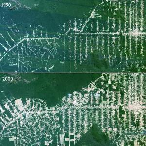 Deforestation In the Amazon by PLANETOBSERVER