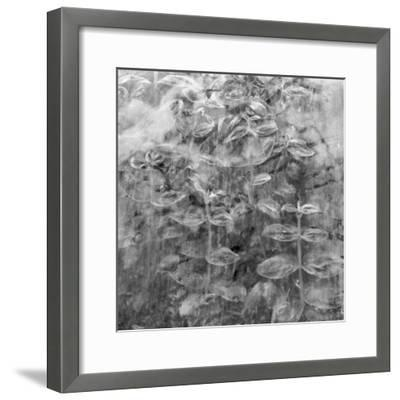 Plant Pressed Up to Glass in a Greenhouse Creates an Abstract Pattern-Keenpress-Framed Photographic Print
