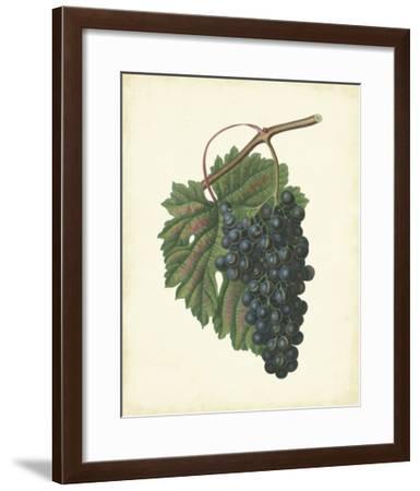 Plantation Grapes I--Framed Giclee Print