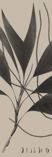 Plantes Exotique IV-Maria Mendez-Giclee Print