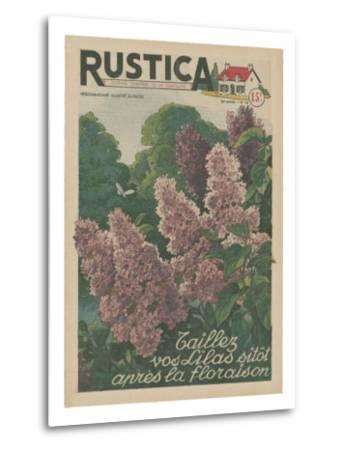 Plantez des Lilacs