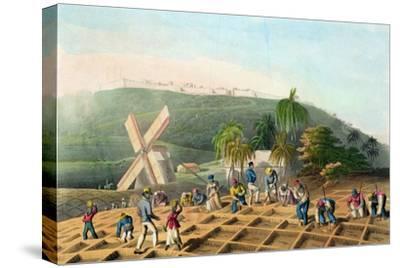 Planting the Sugar-Cane, Pub. by Infant School Society Depository, London, C.1820