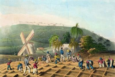 Planting the Sugar-Cane, Pub. by Infant School Society Depository, London, C.1820
