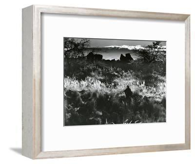 Plants and Landscape, c. 1980-Brett Weston-Framed Photographic Print