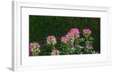 Plants at a garden, Niagara Parks School Of Horticulture, Niagara Falls, Ontario, Canada--Framed Photographic Print