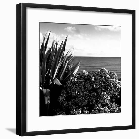 Plants by Garrans Bay, Cornwall, UK-Ellen Kamp-Framed Photographic Print