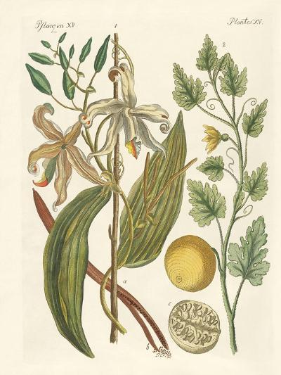 Plants from Hot Countries--Giclee Print