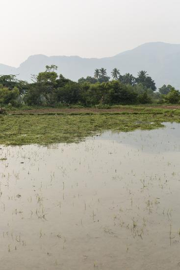 Plants Grow in the Shallow Water of a Farm in Rural India-Kelley Miller-Photographic Print