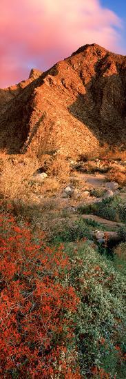 Plants on a Landscape, Anza Borrego Desert State Park, Borrego Springs, California, Usa--Photographic Print