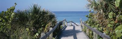 Plants on Both Sides of a Boardwalk, Caspersen Beach, Venice, Florida, USA--Photographic Print