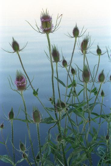 Plants on the edge of lake, Eagle Creek Park, Indianapolis, Indiana, USA-Anna Miller-Photographic Print