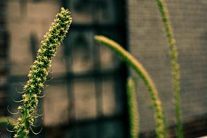 Plants on the Highline NYC
