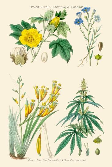 Plants Used in Clothing and Cordage. Cotton, Flax, New Zealand Flax, Cannabis-William Rhind-Art Print