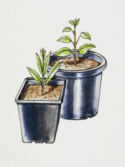 Plastic Pots--Giclee Print