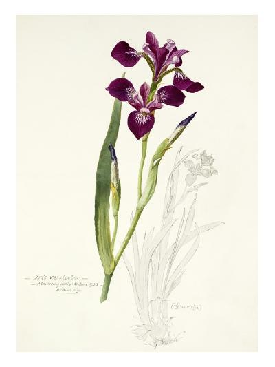 Plate 31-Williamson-Giclee Print