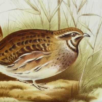 Plate Decorated with Quail, Ceramic--Giclee Print